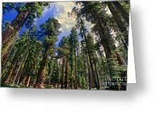 giant sequoias sequoiadendron gigantium yosemite NP Greeting Card