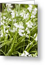 Giant Snowdrops Greeting Card