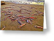 Giant Squid Capitola Beach Greeting Card