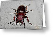 Giant Stag Beetle Greeting Card