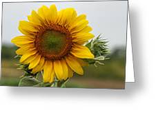 Giant Sunflower Greeting Card