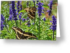Giant Swallowtail Butterfly Couple Greeting Card