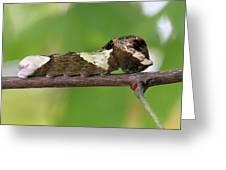 Giant Swallowtail Caterpillar Greeting Card