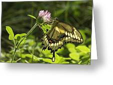 Giant Swallowtail On Clover 3 Greeting Card
