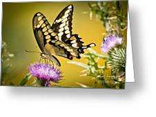 Giant Swallowtail On Thistle Greeting Card