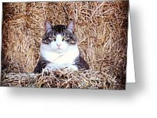 Giant The Handsome Cat Greeting Card