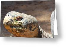 Giant Tortoise Greeting Card