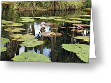 Giant Water Lilies Greeting Card