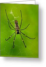 Giant Wood Orb Spider Greeting Card by Robert Jensen
