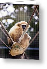 Gibbon On A Swing Greeting Card