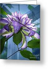 Gift Of Clematis Greeting Card