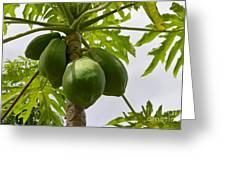 Gigantic Papaya Greeting Card