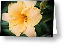 Gild The Lily Greeting Card