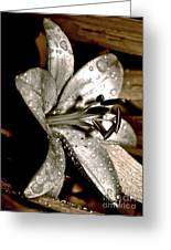 Gilded Lilies 3 Greeting Card