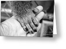 Gimme Five Greeting Card