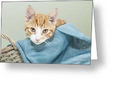 Ginger Kitten In A Basket Greeting Card