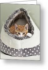 Ginger Kitten In An Igloo Greeting Card