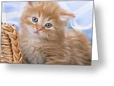 Ginger Kitten In Basket Greeting Card