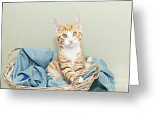 Ginger Kitten Standing In A Basket Greeting Card