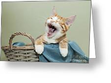 Ginger Kitten Yawning Greeting Card