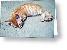 Ginger Sleeps Greeting Card