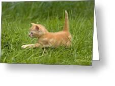 Ginger Tabby Kitten Greeting Card