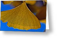 Gingko Leaf Losing Chlorophyll Greeting Card