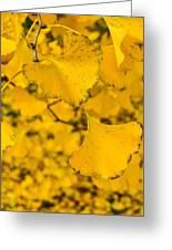 Gingko Tree Greeting Card