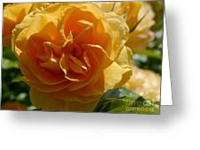 Ginny's Rose In The Sun Greeting Card