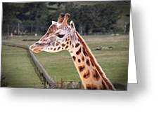 Giraffe 02 Greeting Card by Paul Gulliver