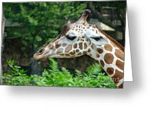 Giraffe-09028 Greeting Card