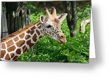 Giraffe-09034 Greeting Card