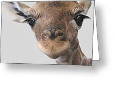 Giraffe Baby Greeting Card