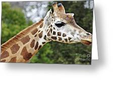 Giraffe Beauty Greeting Card