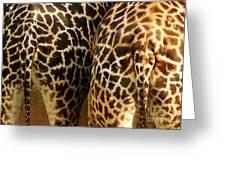 Giraffe Butts 2 Greeting Card