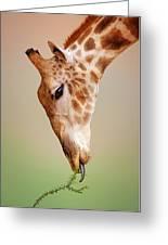 Giraffe Eating Close-up Greeting Card