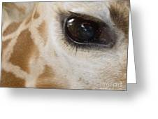 Giraffe Eye Greeting Card
