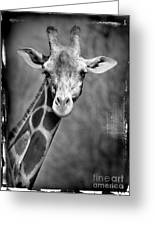 Giraffe Face In Black And White Greeting Card