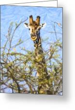 Giraffe Giraffa Camelopardalis Peeping From Acacia Greeting Card