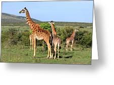 Giraffe Group On The Masai Mara Greeting Card
