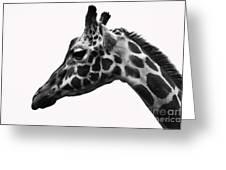 Giraffe Head Shot Greeting Card