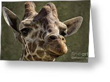 Giraffe Hey Are You Looking At Me Greeting Card