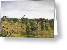 Giraffe Panorama Greeting Card