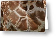 Giraffe Patterns Greeting Card