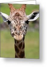 Giraffe Peek A Boo Poster Greeting Card