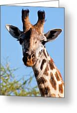 Giraffe Portrait Close-up. Safari In Serengeti. Greeting Card