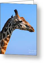 Giraffe Portrait Close-up. Safari In Serengeti. Tanzania Greeting Card