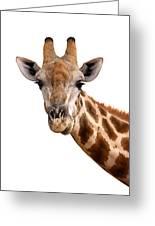 Giraffe Portrait Greeting Card