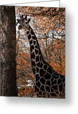 Giraffe Posing Greeting Card