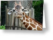 Giraffe-really-09025 Greeting Card